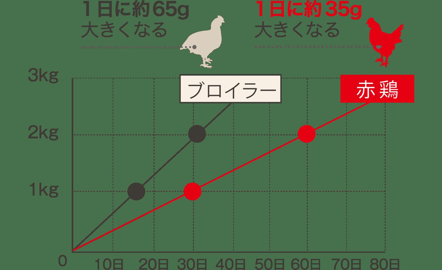 赤鶏のスロー・グロウス 比較図(目安)